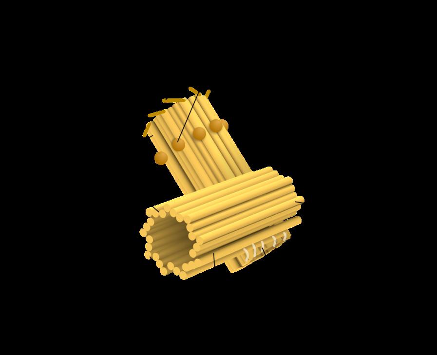 Figura 3- imagem do centríolo